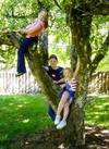 Kids_tree1